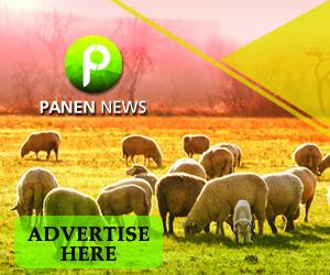 banner 300x250 panen news