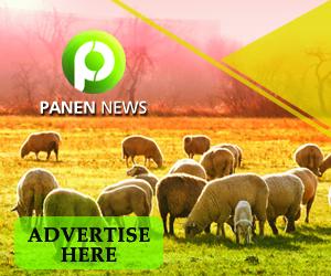 panen news ads 300x250