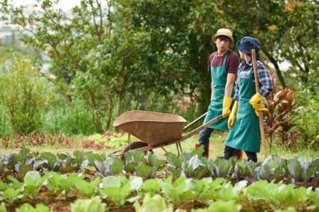 Ilustrasi Organic Farmer