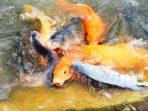Digitalisasi Ikan
