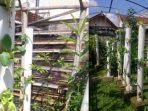 kampung sayur Jogonegaran