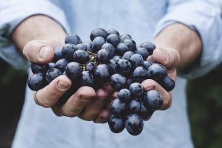 Ilustrasi Anggur