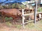 Tempat Penjualan Hewan Kurban di Tangerang Selatan (15/7)