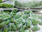 Produk Hortikultura