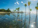 ekosistem-laut-di-kawasan-konservasi-perairan-alor