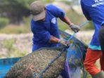 proses panen udang di PT Agung Menjangan Mas